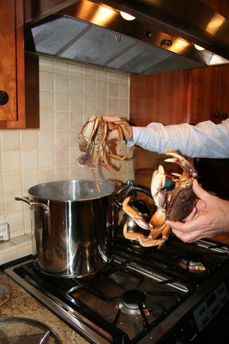Live Crabs-9
