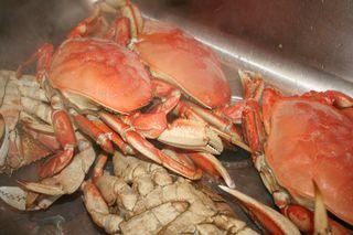 Live Crabs-14
