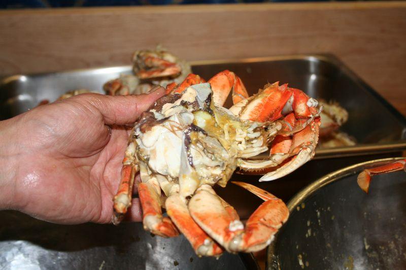 Live Crabs-23