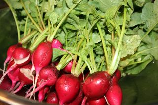 Corn and Radishes-14