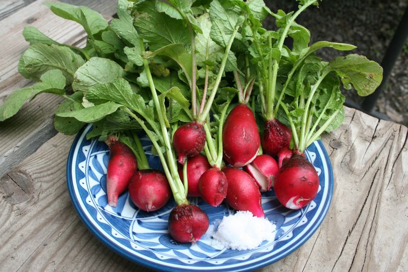 Corn and Radishes-15