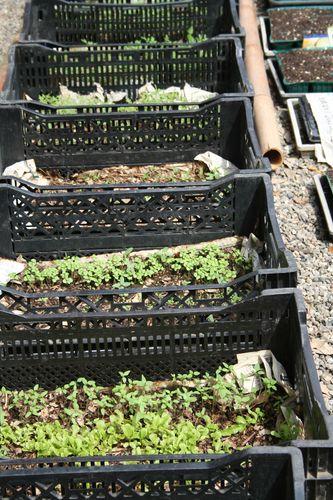 Planting Seeds-5