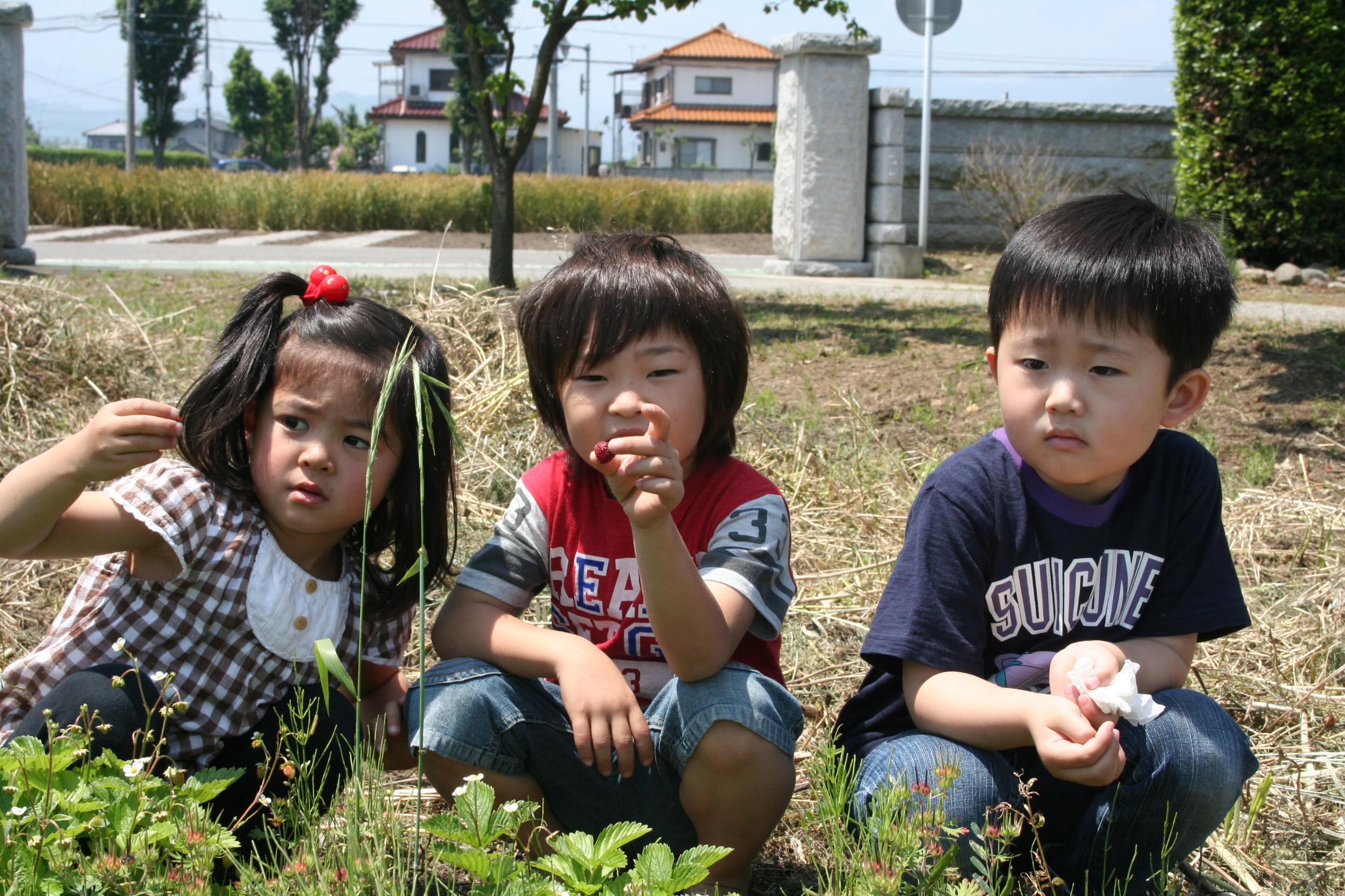 Japanese Summer & Monster Weeds-5